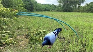 Awesome Quick Bird Trap Using Water Pipe Trap How To Make Bird Trap With Water Pipe