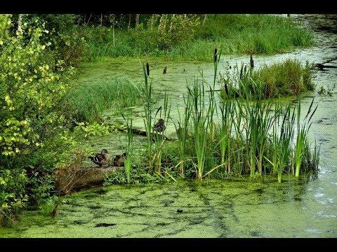 рыбалка на болоте и в камышах