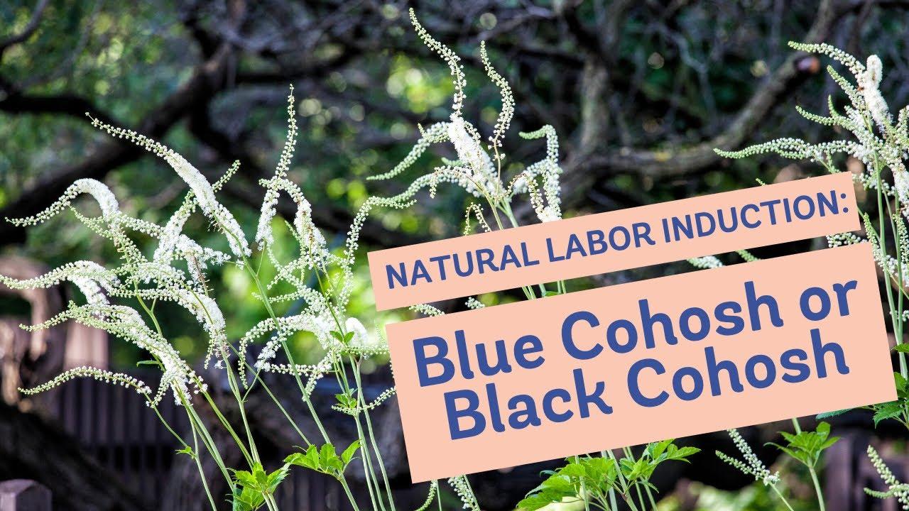 Natural Labor Induction Series: Blue Cohosh or Black Cohosh