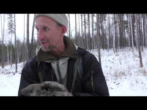 Дикая лесная мышь - вдруг стала ручной))))