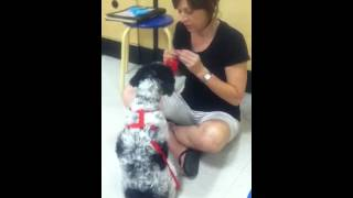 Petsmart Dog Training