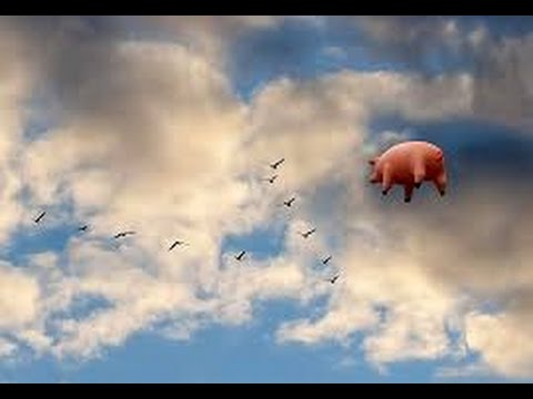 Pink Floyd Animals Wallpaper Pink Floyd Cover Pigs On The Wing Full Version Youtube
