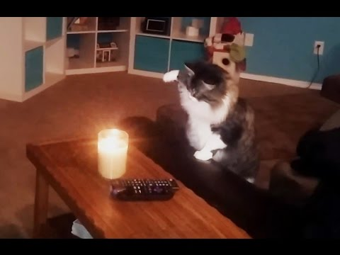 Curious Cats vs. Candles Compilation