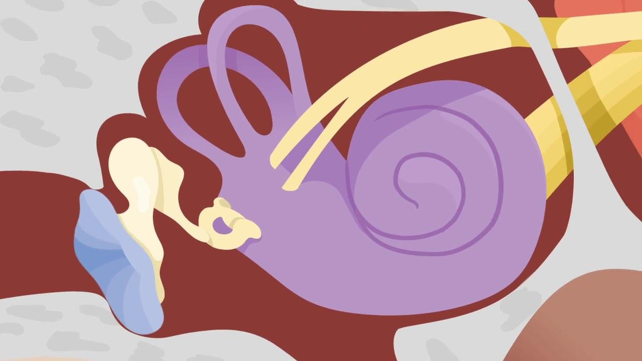Download How the Ears Work - Nemours KidsHealth
