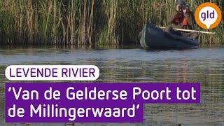 Levende Rivier 31 juli 2017 - Levende Rivier - eerste etappe