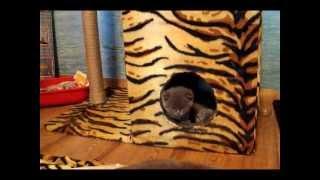 плюшевые котята играют