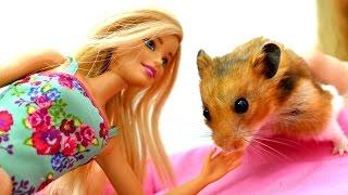 Кукла Барби играет с хомяком. Домашние животные для девочек и игры в куклы
