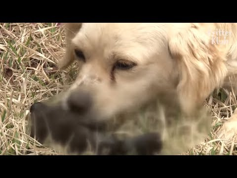 Shocking Behavior Mother Dog Did Right After Her Dead Puppy Was Buried Is (Part 2) | Kritter Klub