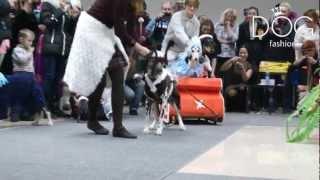 Fashion Dog TV - Выставка собак 2011, Россия г.Омск декабрь 2011г.(Выставка собак 2011, Россия г.Омск декабрь 2011г. Фото видео съемка вашей собаки http://vk.com/nausla Зоосалон Fashion Dog..., 2012-03-09T18:40:04.000Z)