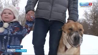 В правительстве России готовят перечень пород собак, которые могут навредить человеку
