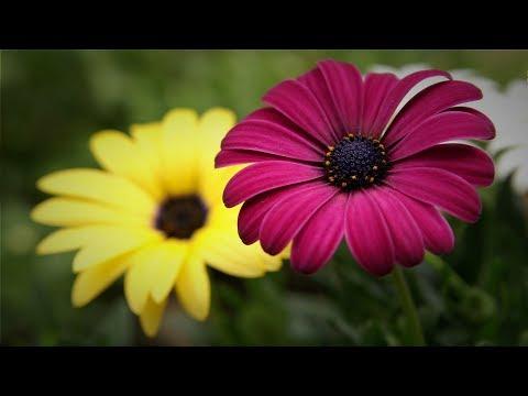 Producción de Flor de Ornato  Cap 256