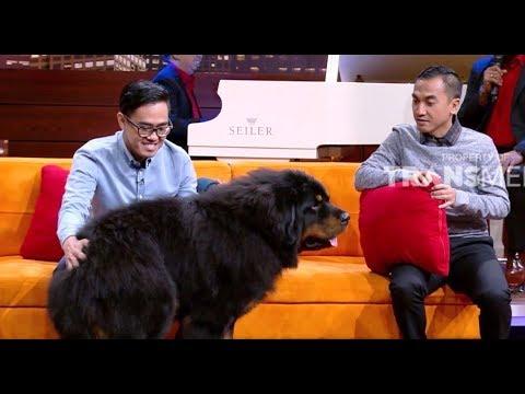 TIBETAN MASTIFF, Anjing Terbesar Dan Termahal Di Dunia | HITAM PUTIH (01/02/19) PART 3