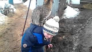 Наш наглый котёнок)