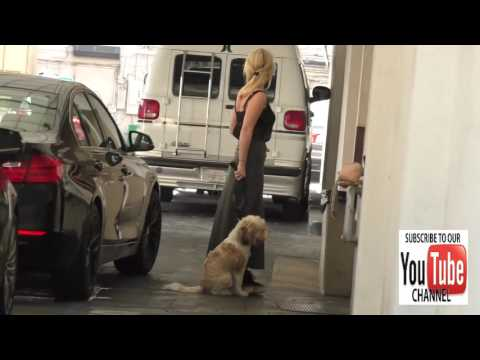 Alice Eve out walking her dog while shopping in Beverly Hills