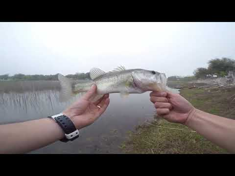 Bandera Texas Private Pond Bass Fishing