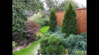 видео Декоративные живые изгороди – 11 решений композиции