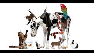 Всемирный день животных: смешные видео домашних любимцев