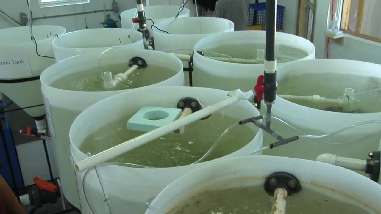 Hatchery - YouTube