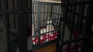 Kingsley nap time in Kennel