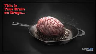 Brain on Drugs| Single Cell Animation