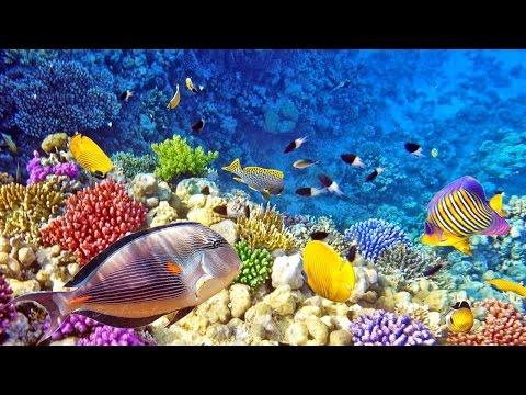 [WOW] Raja Ampat Islands, New Favorite Tourism Destination in Indonesia
