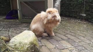 De konijntjes mogen naar elkaar's terrein en hok.