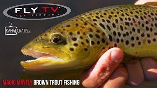 [TEASER] FLY TV - Magic Mayfly Brown Trout Fishing