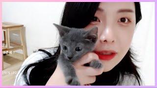 치명적인 귀여움을 가진 회색 아기고양이