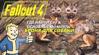 Гайд Fallout 4 Где находится броня для напарника Псина
