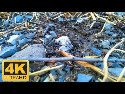 4k Nature .African Wildlife 🐜Anthill of Nature in UHD 🐜 Film & Nature Sound . Calm Video