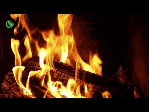 LIVE EPIC NATURE and FIRE Relax Sound to Sleep Live Stream