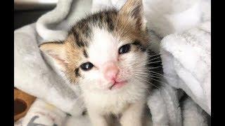 Спасатели вытащили котёнка-сироту с того света: любовью, помощью кота и компанией игрушечного мишки