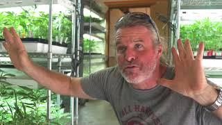 Gambar cover Kevin Jodrey Explains his Skunky Cannabis Ester Revival Project