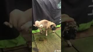 Amusing Funny Videos Minutes ~ Amusing #shorts Video - 51  | NewsBurrow thumbnail