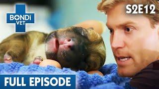 Saving Puppies Late Night | FULL EPISODE | S02E12 | Bondi Vet