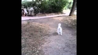Кошачьи гонки...