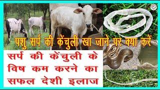 पशु सर्प की केंचुली खा जाने पर क्या करें, देशी सफल इलाज, sarp kee kenchulee ka Successful treatment