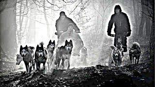 Sled Dogs -siberian Husky Tribute[hd]