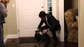 Собака и хозяин через год разлуки