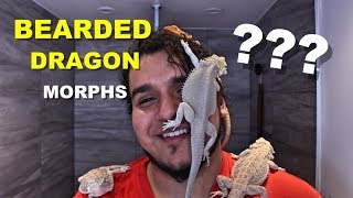 How To Identify What Morph Your Bearded Dragon Is !!!