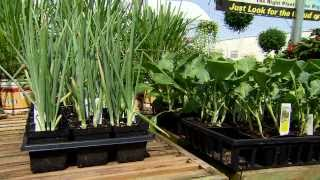 Plant fall vegetables now