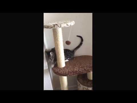Cat Fails at Life
