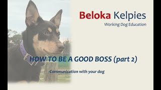 How to be a good boss (part 2) - 2 MIN Kelpie Pup Training