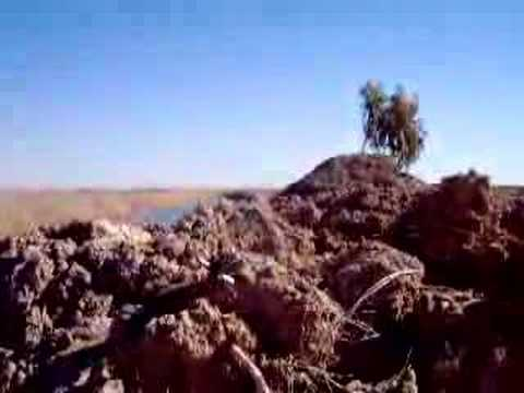 Exploding Cow in Iraq