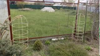 видео Шпалера для вьющихся растений виды особенности установки