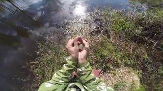 Ловля не крупного карася весной на лесном озере, видео rybachil.ru(Ловля карася без прикормки. http://rybachil.ru., 2016-05-08T05:10:09.000Z)