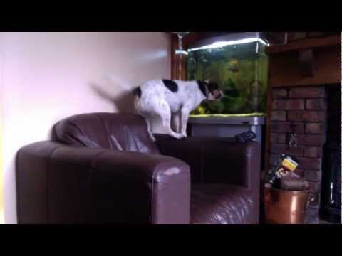 Stupid Dog Tries To Get Fish In Fish Tank!