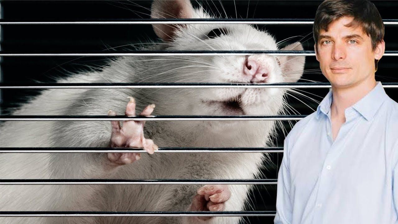 Vegan Food Developers Caught In Cruel Animal Testing Law