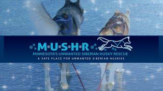Minnesota Unwanted Siberian Husky Rescue (mushr)