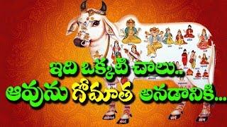 Holy Cow - God's  Extraordinary Creation II RECTV MYSTERY